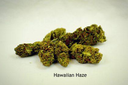 Hawaiian Haze