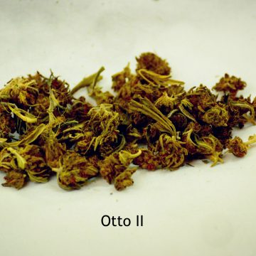 Otto II
