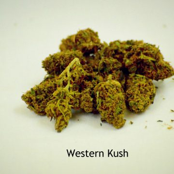 Western Kush